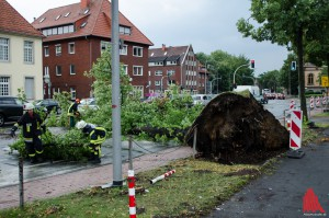 Umgestürzte Bäume beschäftigen die Feurwehr. (Foto: th)