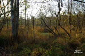 Beim Spaziergang durch das Venner Moor bei Hiltrup kam Katja auf die Idee zu ihrem Fantasy-Krimi. (Foto: Katja Angenent)