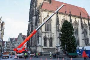 Der Kran der Feuerwehr Münster hievte die Nordmanntanne an ihren Standort auf dem Lambertikirchplatz. (Foto: cabe)