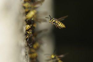 Insektenplagen locken auch unseriöse Notdienste ans Tageslicht. (Foto: CC0)