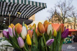 Viele bunte Farben sind auf dem Markt zu sehen - und man kann sie sich sogar mit nach Hause nehmen! (Foto: Thomas Hölscher)