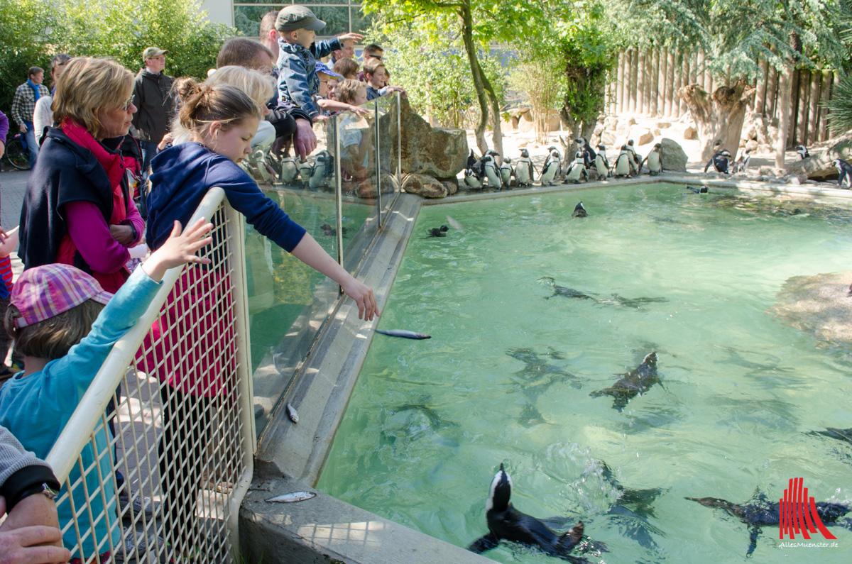 Unmittelbar hinter der Glasscheibe ist die Chance am größten, den Fisch an den Mann, äh, Pinguin zu bringen. (Foto: th)
