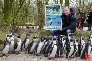 Im Allwetterzoo staunen auch die Pinguine nicht schlecht über das neue Plakat von Künstler Lars Wentrup. (Foto: th)
