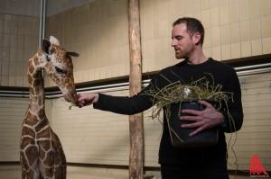 """Christoph Metzelder und Giraffen-Kalb """"Rocky"""" hatten schnell einen Draht zueinander. (Foto: th)"""